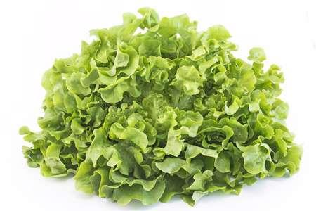 conservation de la salade en feuille